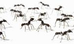 1-Ants-001