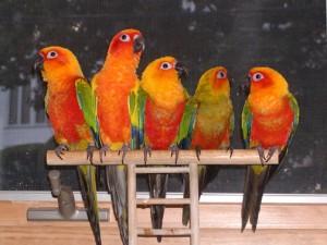five_parrots