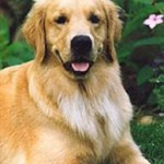 Dog_Friend (10)