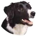 Dog_Friend (11)