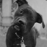 Dog_Friend (12)