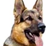 Dog_Friend (6)