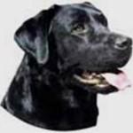 Dog_Friend (8)